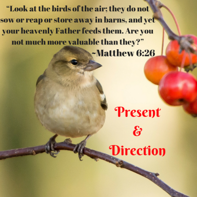 """Look at the birds of the air; they do not sow or reap or store away in barns, and yet your heavenly Father feeds them. Are you not much more valuable than they?""~Matthew 6_26"